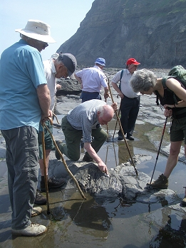 Members of Helmsley Archaeological and Historical Society examining the remains of jet embedded in shale on the sea shore between Port Mulgrave and Runswick Bay