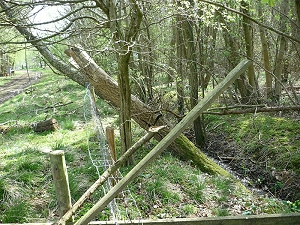 The ride between Green Sykes and Robson's Spring wood.  It shows trees growing in the ride and a slight bank on each side of the ditch.